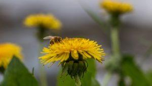 méhpempő tippek felnőtteknek és gyerekeknek